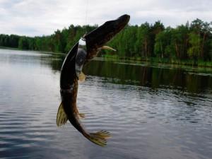 Рыбалка в Татаринцево
